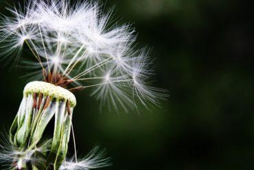Allergie: Frühlingszeit – Allergiezeit